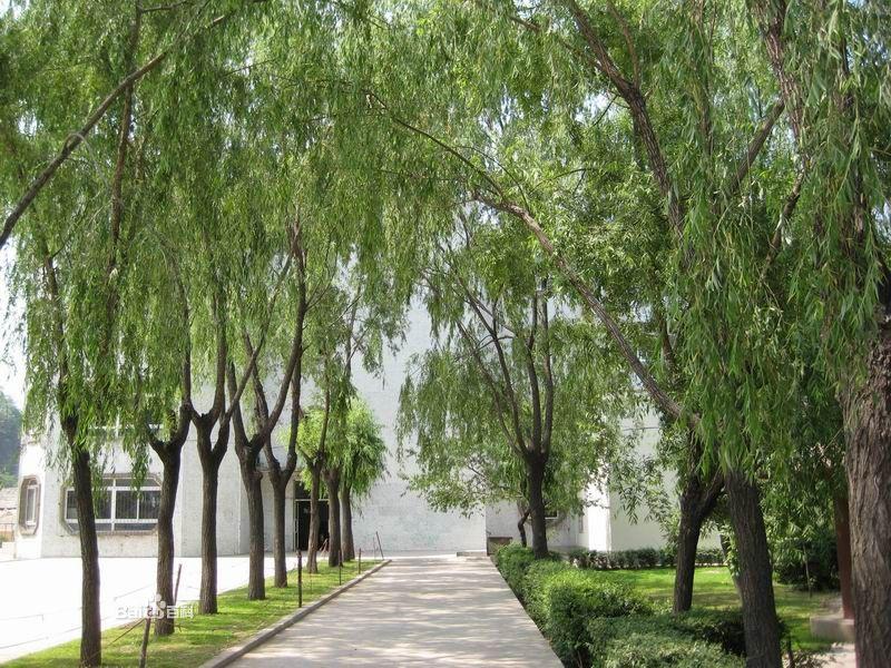 湖北艺术职业学院校园风景(21343)